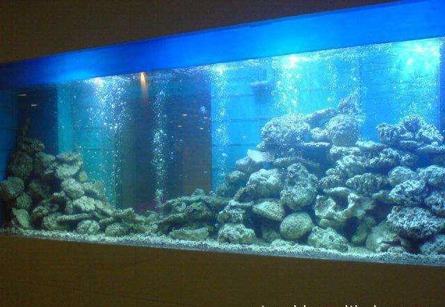 重庆鱼缸厂家浅谈:玻璃鱼缸和亚克力区别你知道吗?