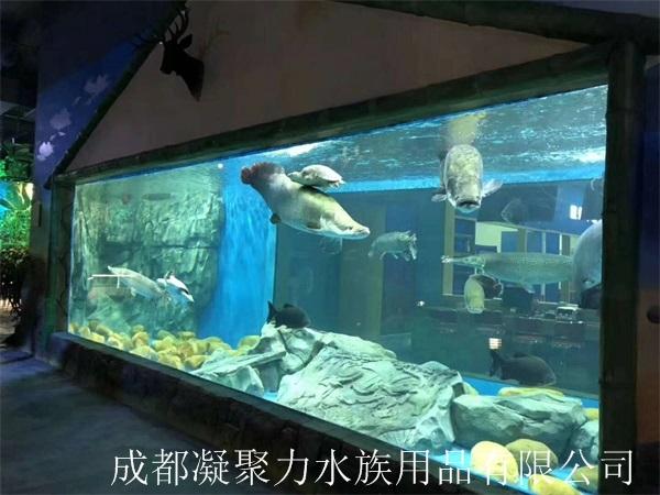 重庆大型观赏鱼缸制作