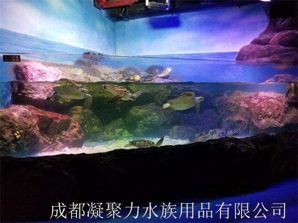 重庆亚克力鱼缸定做厂家