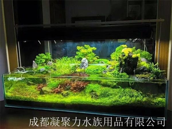 重庆水草缸定制厂家