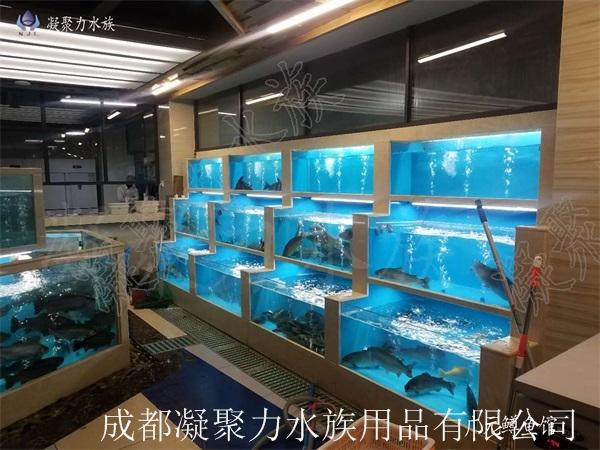 广元鳟鱼馆海鲜池