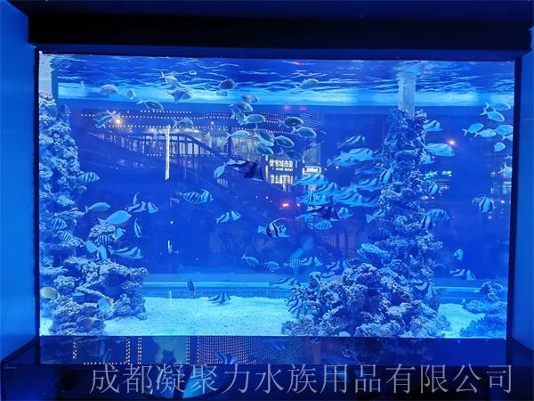 重庆大型观赏鱼缸设计