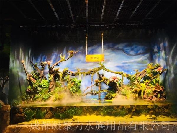 重庆雨林缸制作