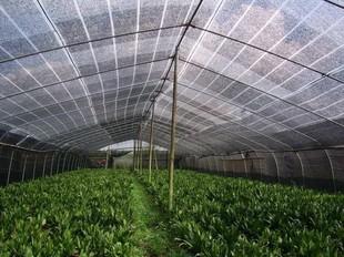 河南/河北温室大棚使用遮阳网的原因