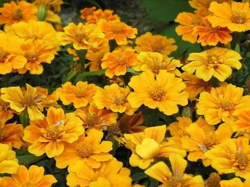 宿根花卉冬天怎样防止病虫害?