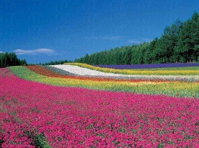 花海系列都有哪些花卉品质