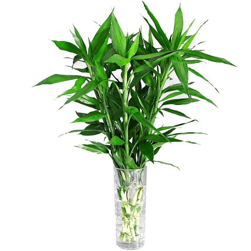 浅谈水生系列植物的南北差异