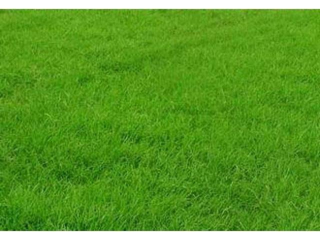 台湾青草坪块