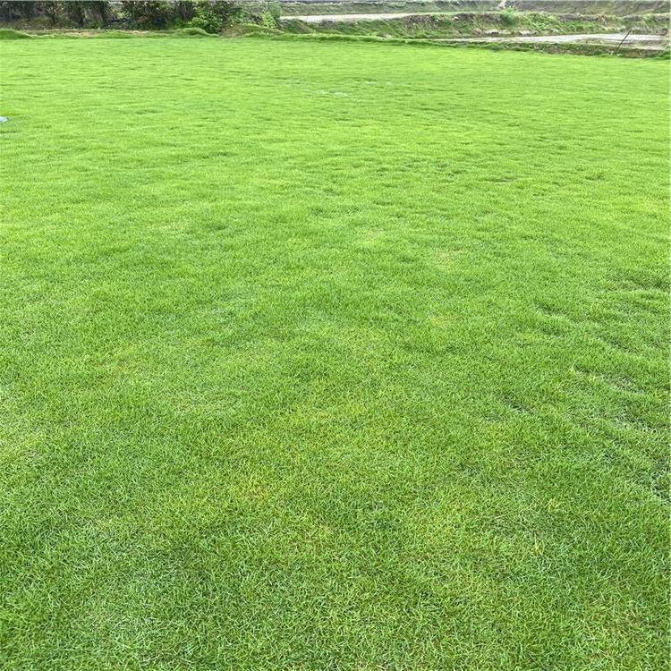 夏威夷草草坪