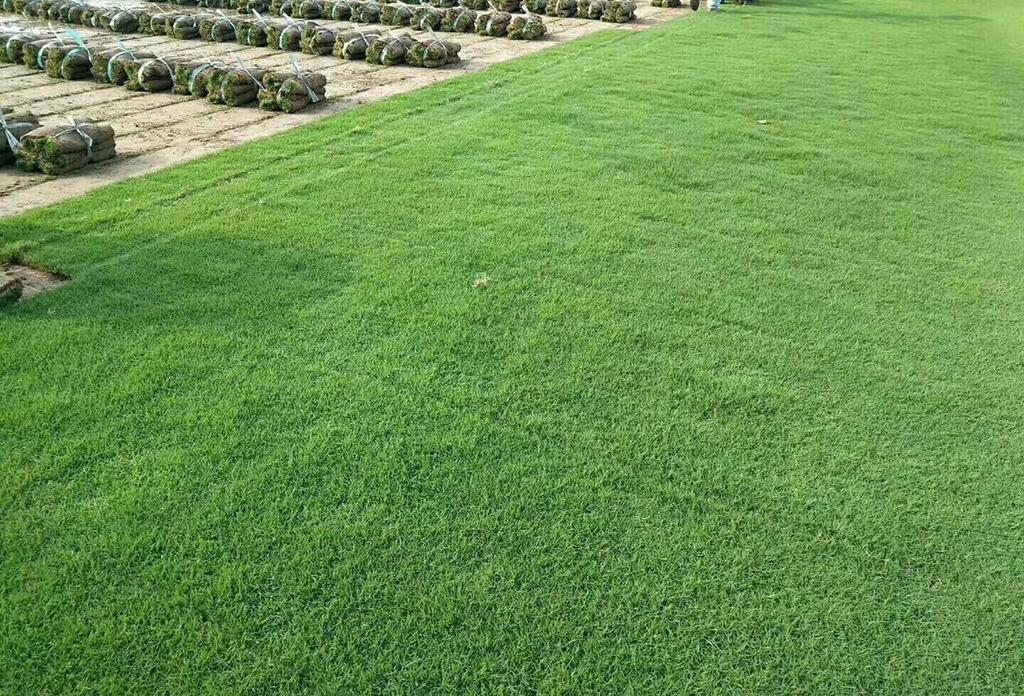 学校足球场的草坪一般都有哪些要求?