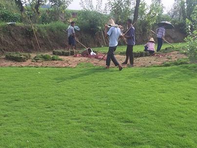 重庆草坪种植