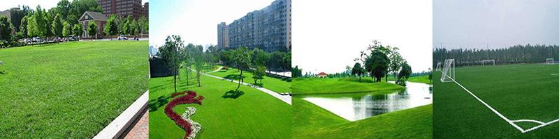 重庆混播草坪种植基地