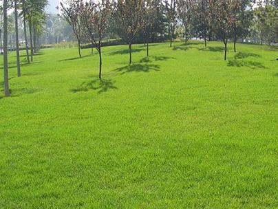 贵州休闲草坪