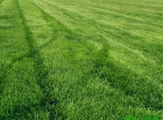 重庆草坪种植基地
