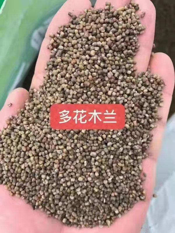 重庆多花木兰种子批发