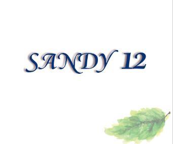 SANDY 12耳背式助听器