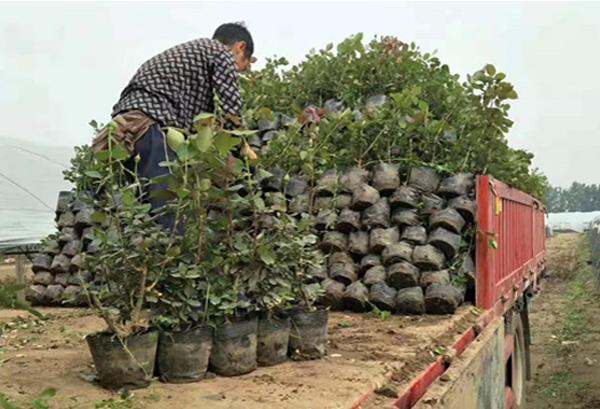 养盆栽月季需要遵循的以下几种方法,来了解下吧