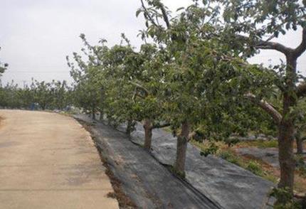 果树防草布