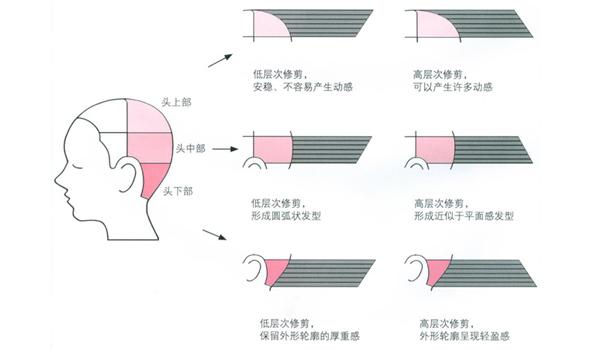 修剪发型前为什么要将头后部分成3个分区?