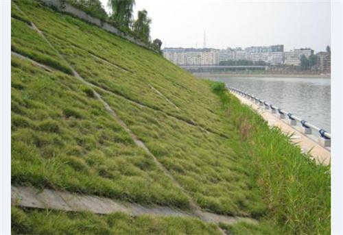 生态透水混凝土护坡