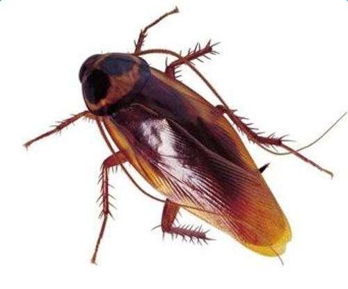 室内除蟑螂