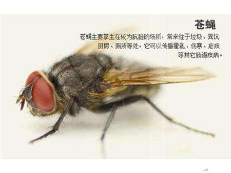 長沙蟲控專家教您如何有限消除蒼蠅