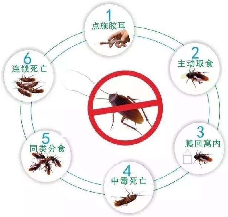 四个方法教您如何灭蟑螂杀虫