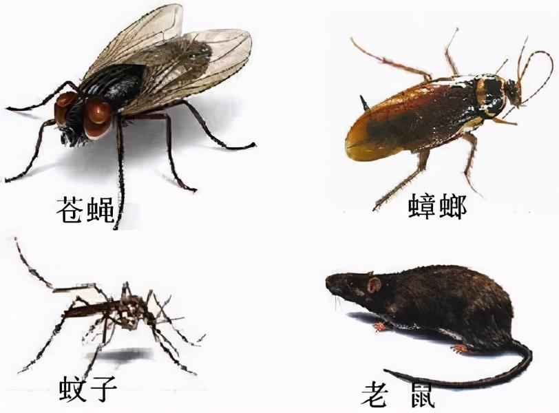 长沙虫控专家带你了解蟑螂在地球的作用