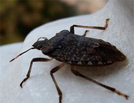 长沙灭蟑螂公司告诉你怎么做好蟑螂防治措施