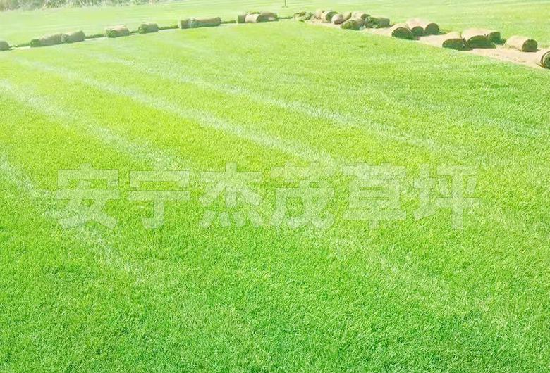 草坪草混播