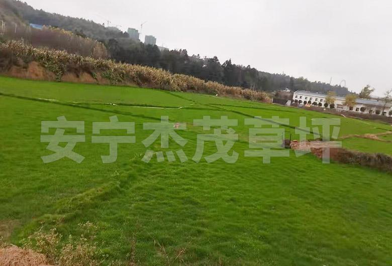 护坡混播草工程