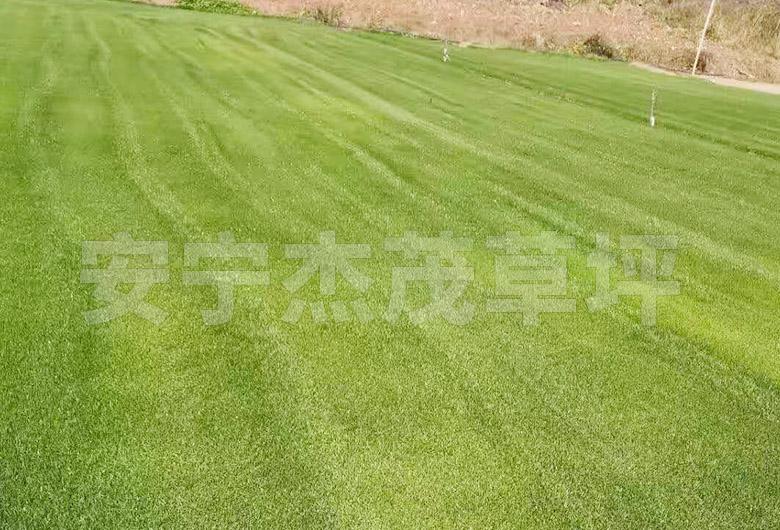 混播草草坪养护