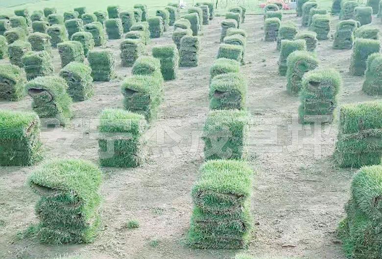 马泥拉草块