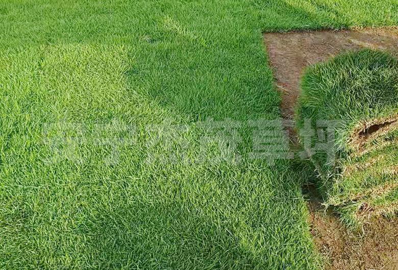马泥拉草坪