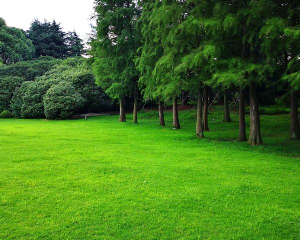 云南草坪景观施工