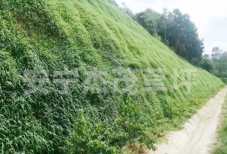 边皮绿化工程
