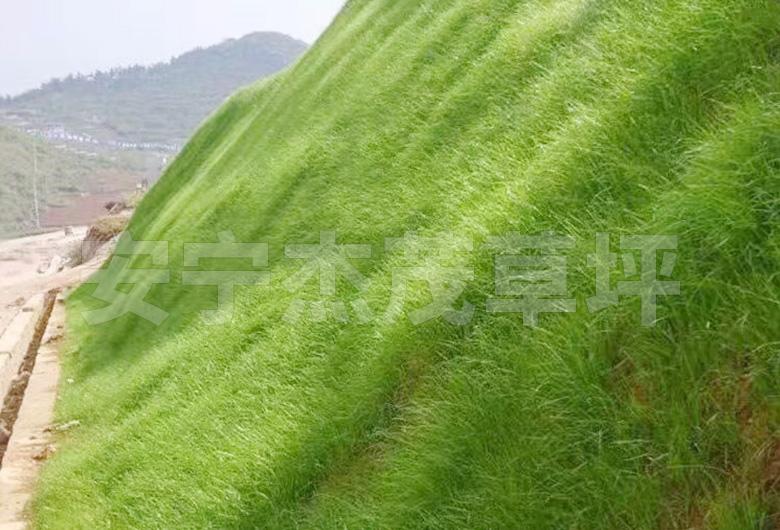 边皮草坪工程