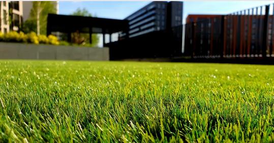 昆明真草草坪