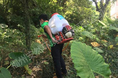 福州小区蚊虫消杀