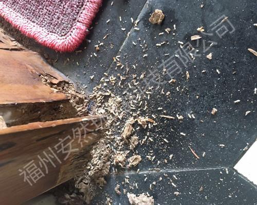 福州除白蚁公司教你如何才能找到白蚁巢穴