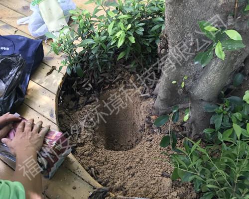 福州白蚁防治公司:白蚁都有什么特性