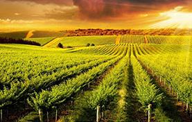 辽宁有机肥生产厂家