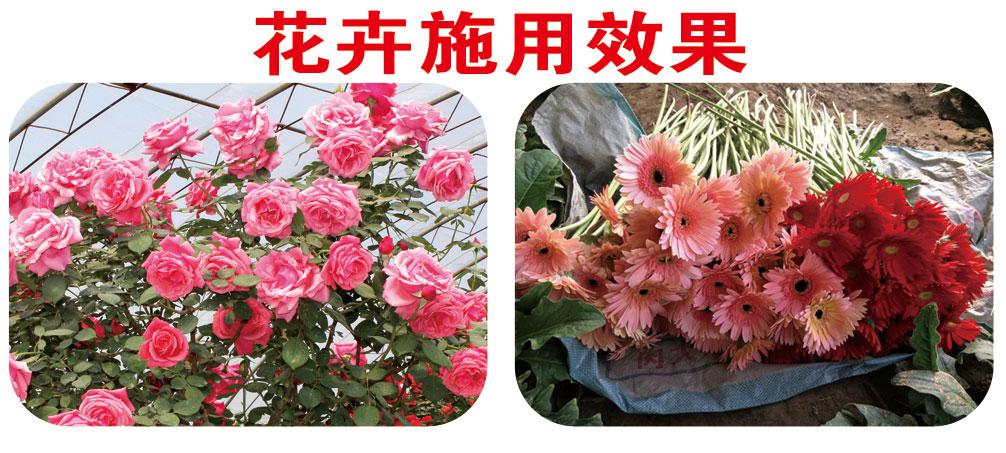 鲜花施用效果