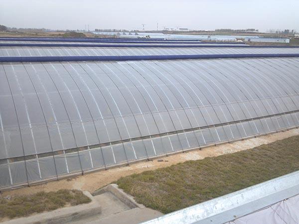 温室大棚11
