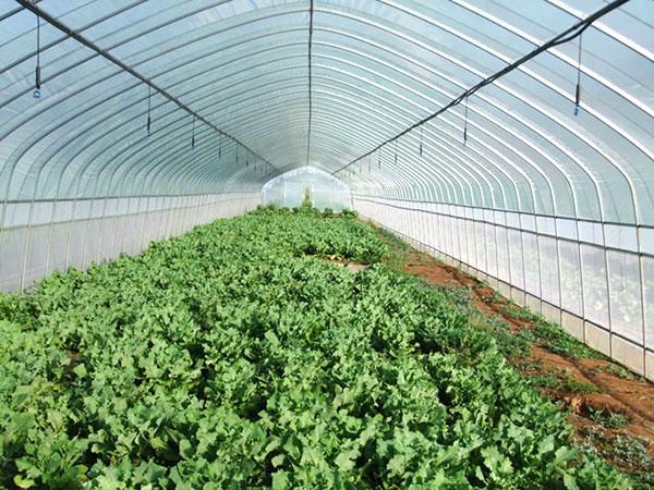 蔬菜大棚建设