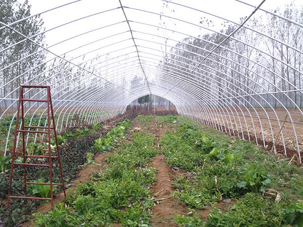 蔬菜大棚图片8