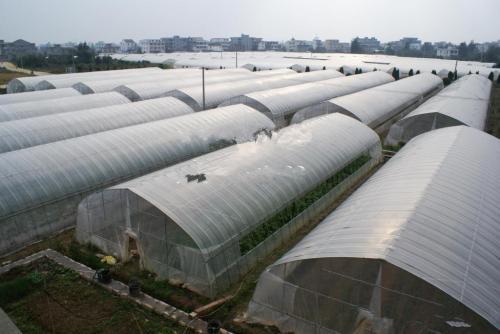 山西蔬菜大棚建造