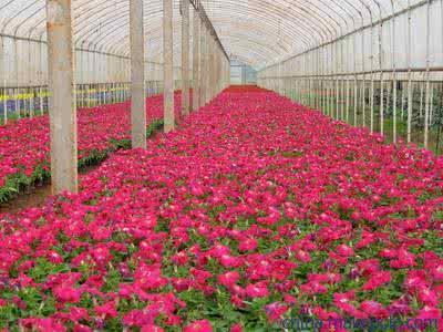 安阳花卉大棚厂家