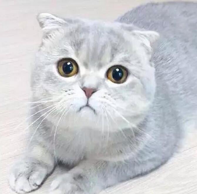 芭迪宠物医院温馨提示宠物春季要瘦身
