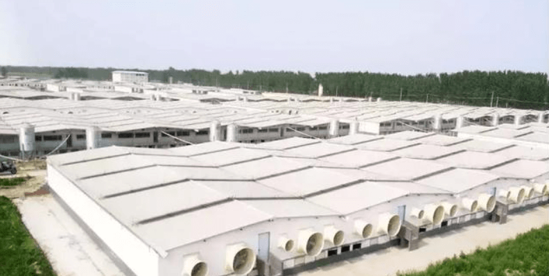 牧原食品股份有限公司华州生猪养殖项目